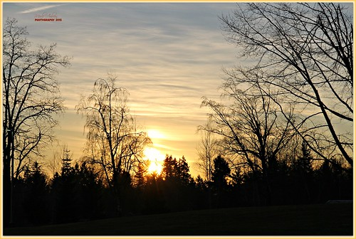trees sunset sky sun nature canon washington silhouettes pacificnorthwest wa washingtonstate graham picmonkey