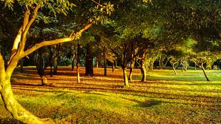 Parque simon bolivar, bogota, arboles en el crepusculo | by David Cabrera Ortiz