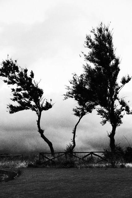 Forse dentro al vento è rimasto qualcosa del tuo amore. (Alda Merini)