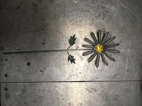 Daisy | by rosependleton