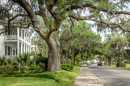 road street usa history architecture nikon unitedstates south southcarolina architectural historic neighborhood southern sidewalk spanishmoss historical antebellum beaufort shady mansions liveoaks treelined lowcountry beauforthistoricdistrict d7000 stgrundy may2015
