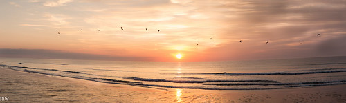 seagull panorama sunrise beach salisbury salisburybeach