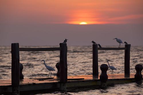 rusinga island isla africa kenya kenia victoria lago lake kingfisher martinpescador atardecer sunset