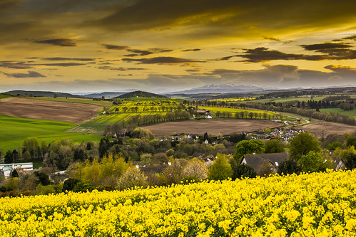 flowers sunset colors yellow clouds scotland colours highland oilseed avoch d7100