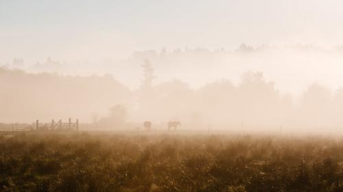 canon135mmf2lusm canoneos5dmarkiii pacificnorthwest farm field fog foggy horses morning scenery landscape washington