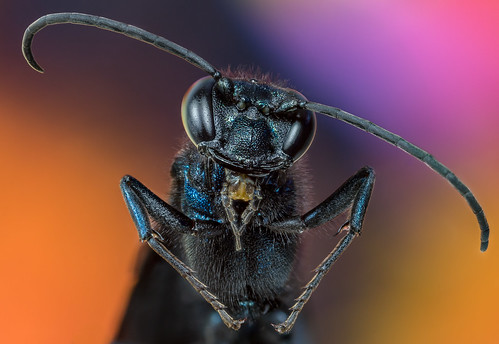 Blue Wasp 44 stack | by W@lterWhite