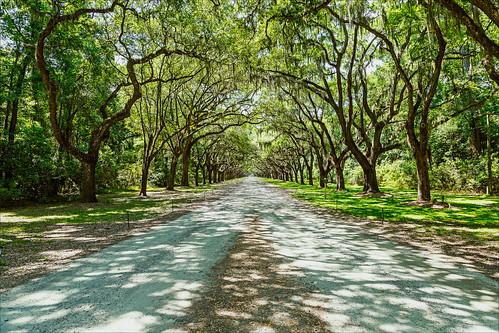 georgia us unitedstates historic liveoak plantation spanishmoss savannah wormsloe oakalley wormslow historicsite