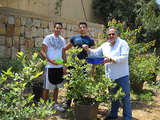 Talal Rayan and Tamim picking Blueberries May 2012 | by toutberryfarms