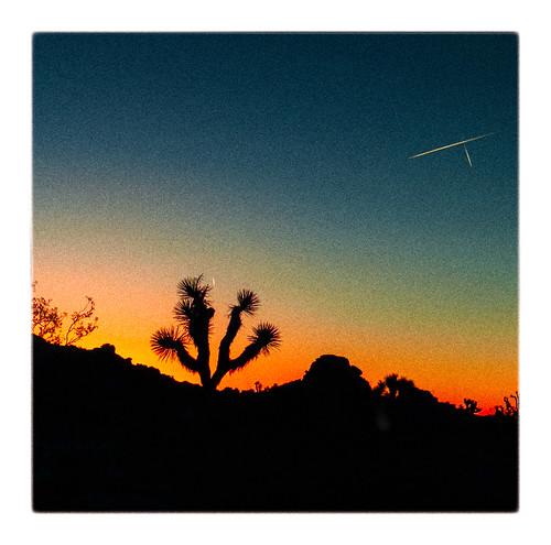 joshuatreenatlpark sunrise