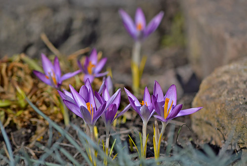 Finally!!! 🌷 This is spring! 🌷 11.04.2018. #Finland | by L.Lahtinen (nature photography)