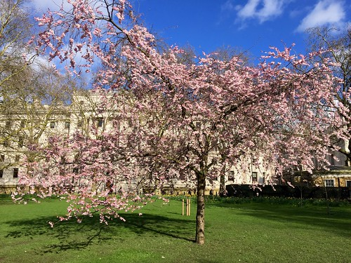 2018 St James's Park cherry blossom | by Fran Pickering