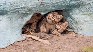 Дети подвала.  Children of the cellar. | by Nitohap