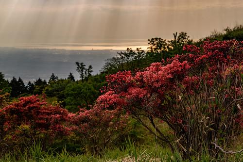 japan flower 大和葛城山 山 mountain 御所市 奈良県 夕景 sunset