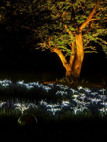 trees nature pa longwoodgardens nightpicture lightinstallation brucemunro