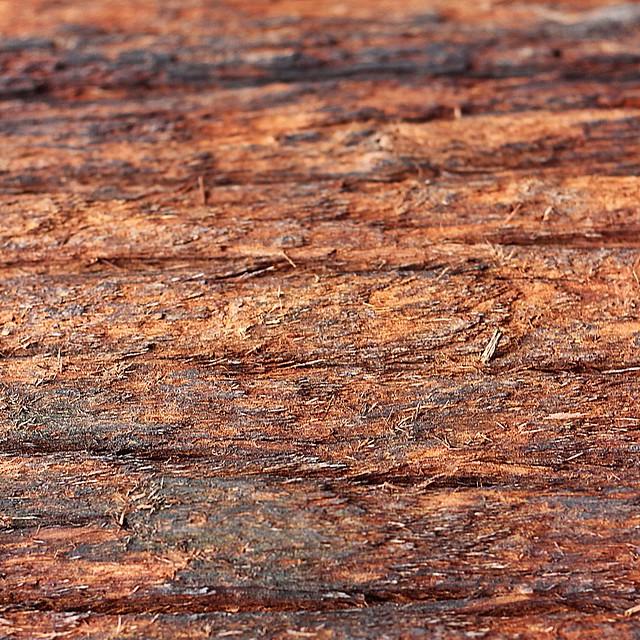 abstracto 2 - corteza de árbol.