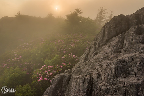 red graysoncounty graysonhighlandsstatepark foggysunset virginiastateparks rhododendronbloom mountrogersrecreationarea bestvirginiahikes