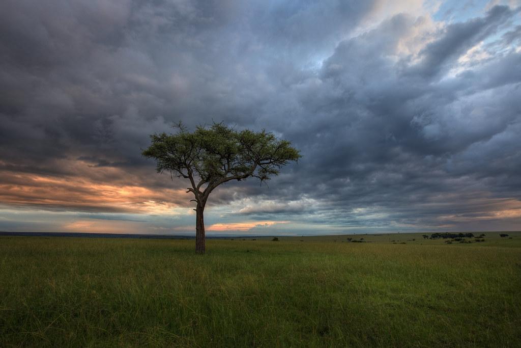 The Moody Mara Plains