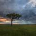 Image: The Moody Mara Plains