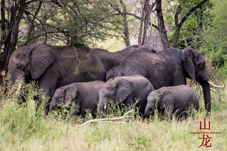 Elephant generations | by DragonSpeed