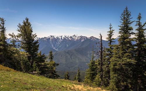 trees usa mountains tree forest canon landscape washington spring day unitedstates outdoor olympicpeninsula sunny portangeles clear evergreen pacificnorthwest washingtonstate olympicnationalpark hurricaneridge olympicmountains tamron2875mmf28 canon6d canoneos6d tamron2875mmf28xrdildasphericalifa09