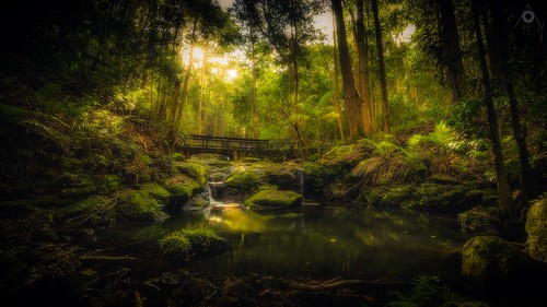 australia bridge canon forest landscape leaves leefilters light longexposure nationalpark palms pool queensland rainforest rocks shadow sun sunshinecoast trees water