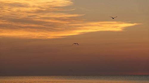 harrisvillestatepark greatlakes lakehuron michigan alconacounty harrisville sunrise 3237 august people person beach vacation nikon d500 2016 nikond500 41365