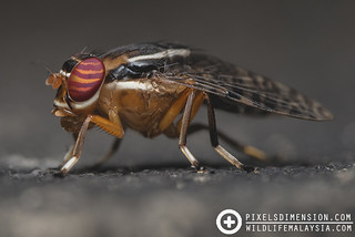 Signal Fly | by PF T.J.