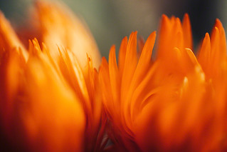 Orange Flames | by avrene