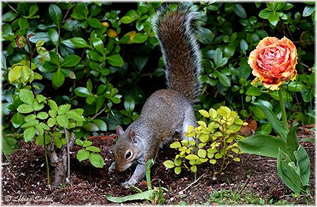 A Gardener!