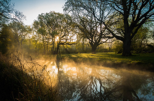 morning mist reflection weather silhouette rural sunrise reflections river landscape dawn spring flickr peaceful olympus hampshire serene daybreak omd basingstoke lightroom 2015 basingstokecanal m43 mft lr6 em5 microfourthirds 918mm mzuiko em5markii em5mark2 em5mk2