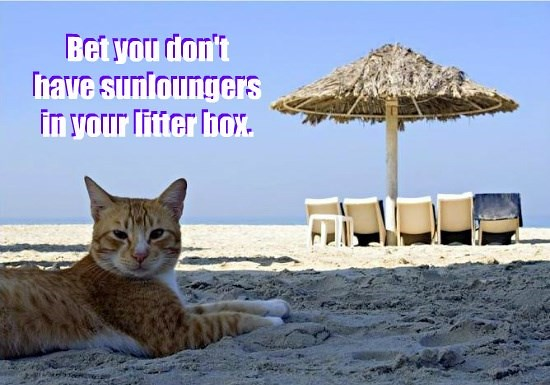 Bet you don't have sunloungers in your litter box.