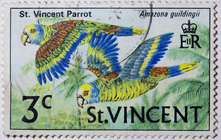St Vincent Parrot (1) | by Mark Morgan Trinidad A