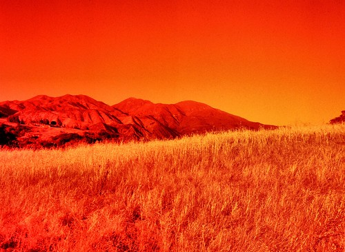 california mountain film analog photo spring afternoon meadow yellowfilter trabucocanyon redscale oneillregionalpark zenzabronicaetrs lomographyredscale100