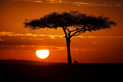 Next: Sunrise on the Mara