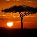Image: Sunrise on the Mara