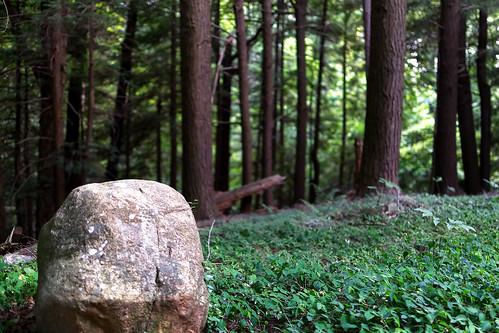 rock outdoor green grass undergrowth glen forest park landscape kirtland ohio metropark lakecounty nikon j5