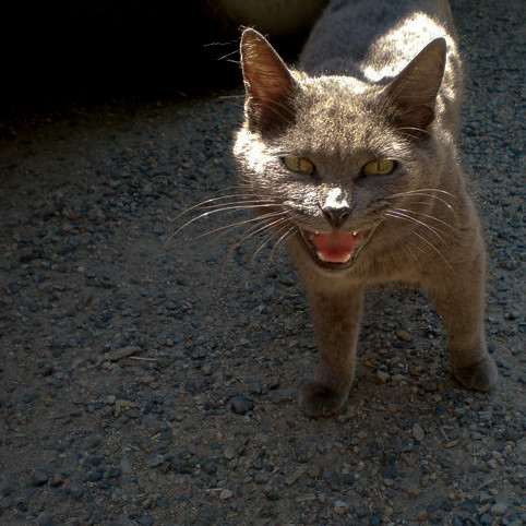 laughing cat | by NancyFry