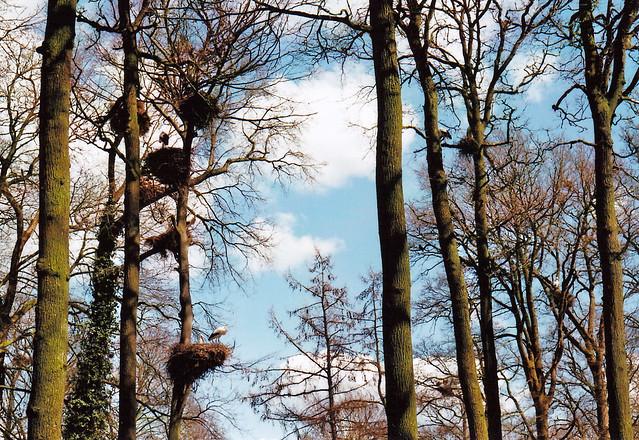 Storchen Kolonie/  Stork colony - I shot film