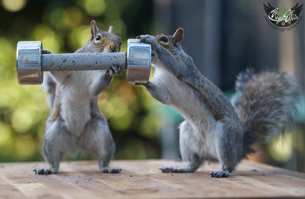 Do Squirrels even lift? 1