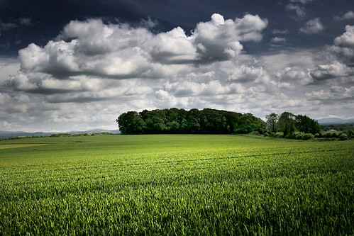 kildare ireland light shade tree crops 2c landscape hugh dempsey
