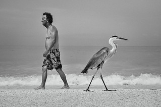 Sanibel Island - Florida | by Ivan SGOBBA