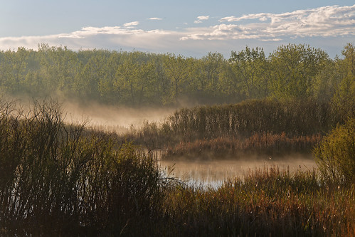 urban usa nature fog sunrise pond colorado foggy urbannature dxo cherrycreekstatepark ef70200mmf4lis canon5dmkiii canon7dmkii ef500mmf4lisii ef14xtciii z5a8954dxosrgb