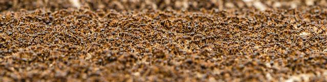 Ant Attack 2  (Explore)