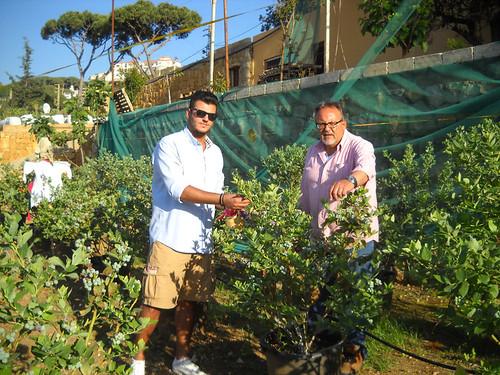 Talal & Fouad picking Blueberries b Apr 27, 2014 | by toutberryfarms