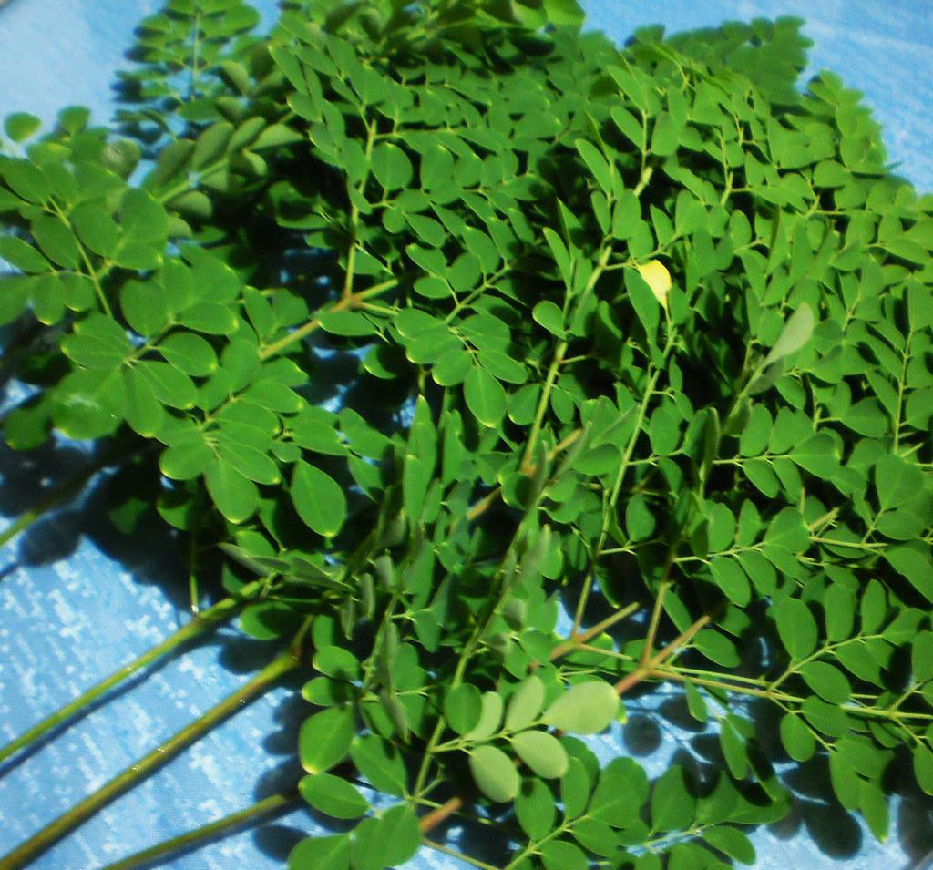 malunggay | Ang malunggáy (Moringa oleifera) ay ang