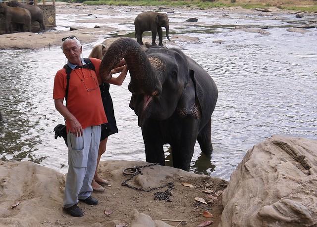 Pinnawela, Sri Lanka, 29490244280_4336281d74_k