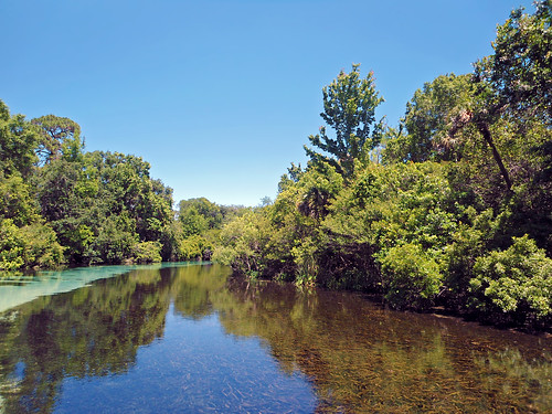 river stream water trees clearsky weekiwachee florida