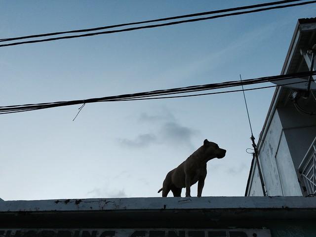 火, 2015-05-12 18:38 - Grand Caseの屋上犬