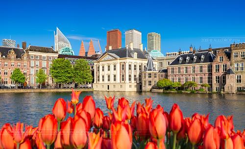 _MG_4052 - Mauritshuis and Binnenhof in Hague   by AlexDROP