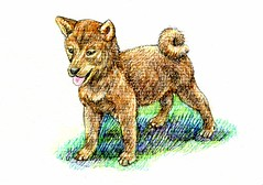 Postcards for the Lunch Bag -Shiba Inu